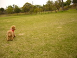 芝生 広い