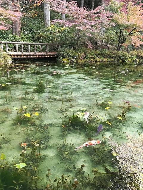 モネの池7