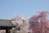 醍醐寺総門前