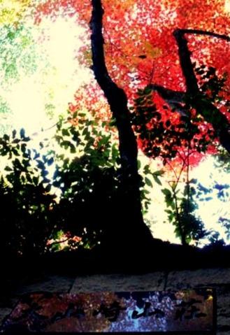 oyamazakisansou_autumn