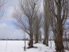 20090315-popuranamiki