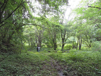植えない森100年