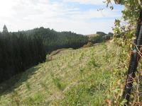 高森草原1