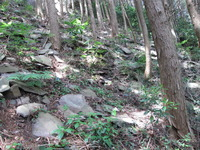 植林地の割れ岩
