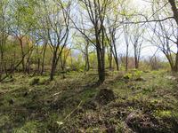 植えない森4月下旬