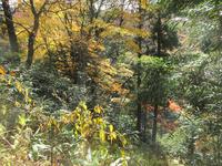 植えない森の紅葉