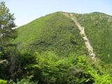 スギ植林地の崩壊
