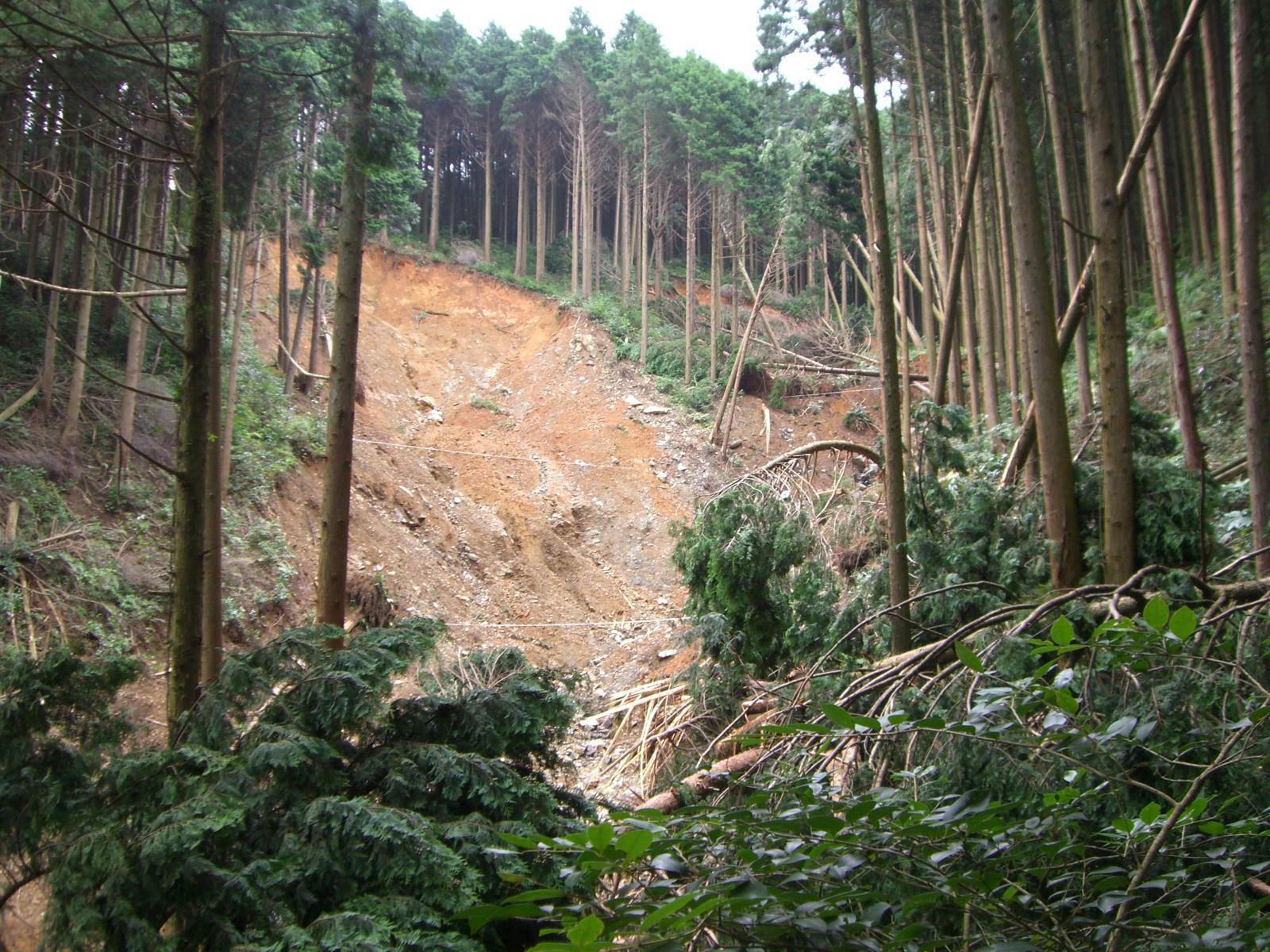 公務員林業の弊害 : 福岡県篠栗町の土砂災害は人災