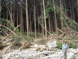 沢沿いの木材生産場とスギ