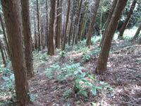 急斜面の植林地