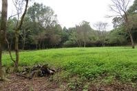 ソバ畑と竹
