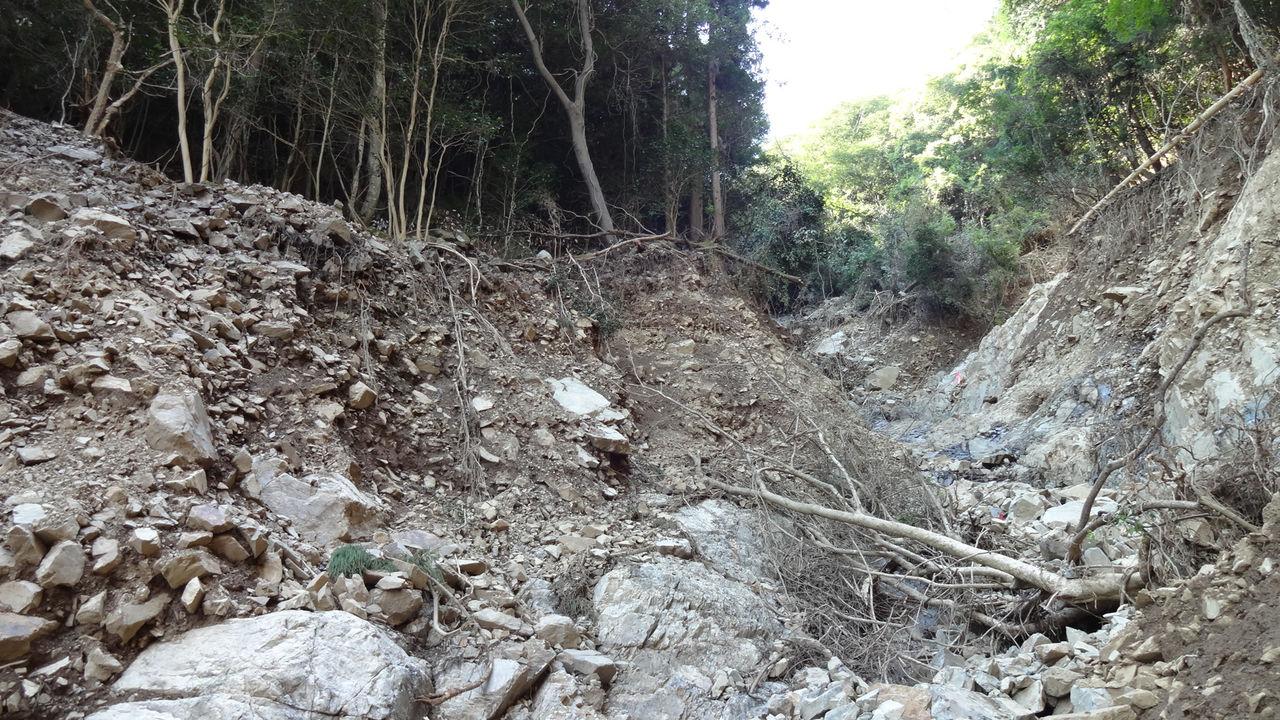 日本の森を救う「植えない森=地...