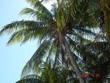 マイアミの空