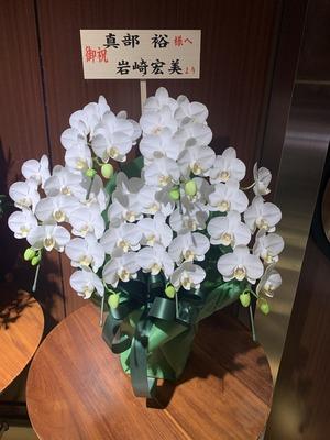 宏美さん花
