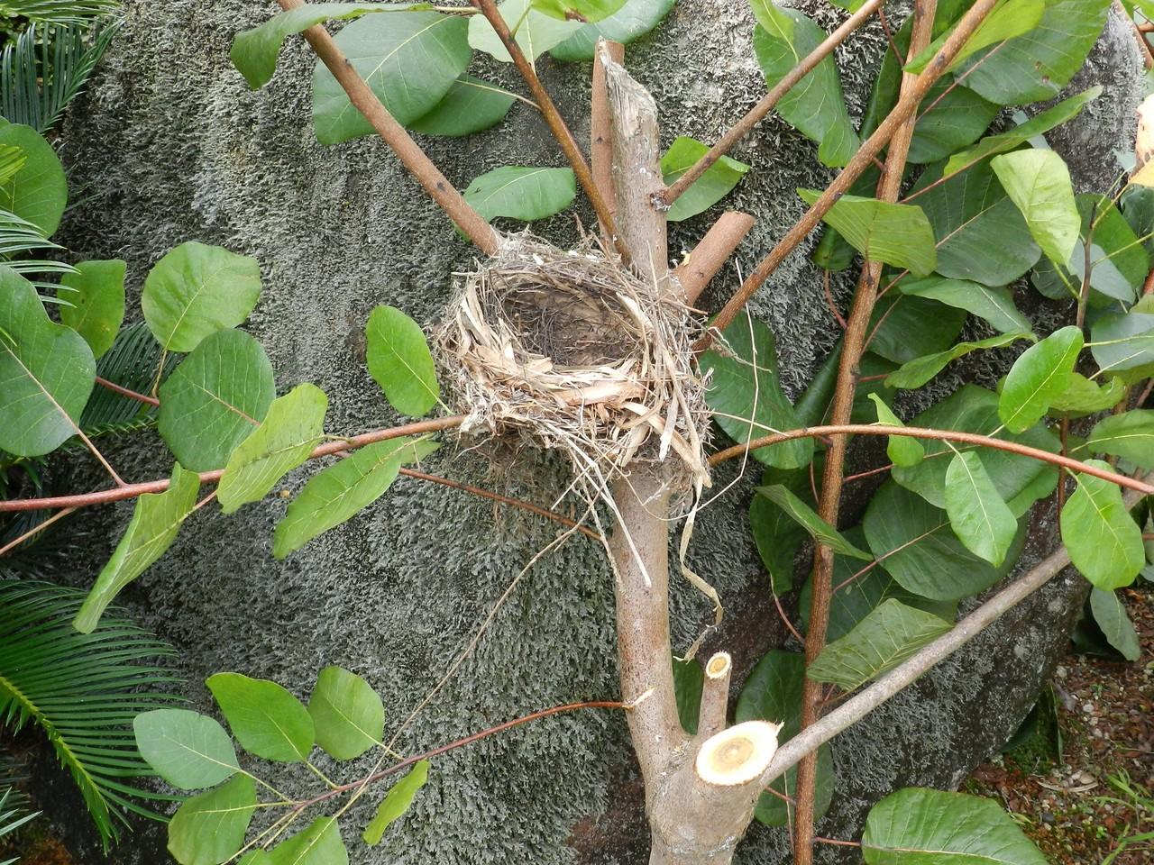 六方たんぼのコウノトリ便り野鳥の巣                Oka Osamu