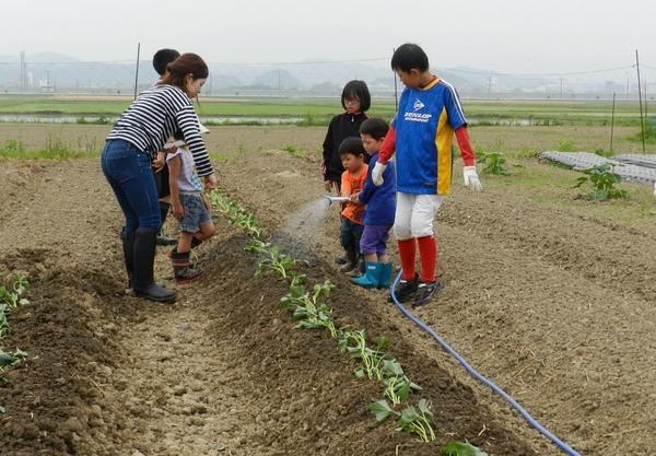 河谷育成会サツマイモ植え