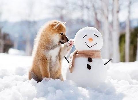 雪だるまと犬