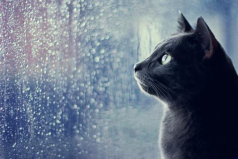 梅雨×ねこ