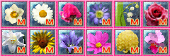 seed_icon