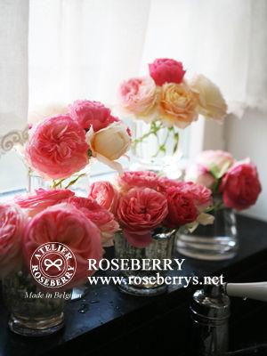 rose32