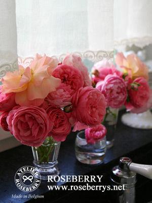 rose26