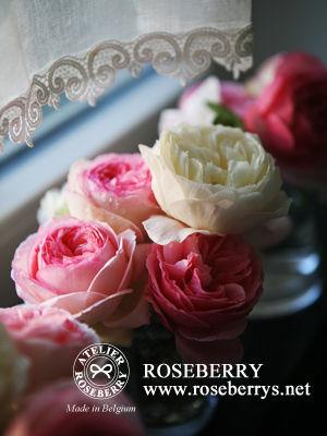 rose34