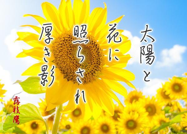 太陽と花に照らされ厚き影phtw