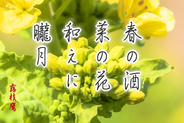 春の酒菜の花和えに朧月