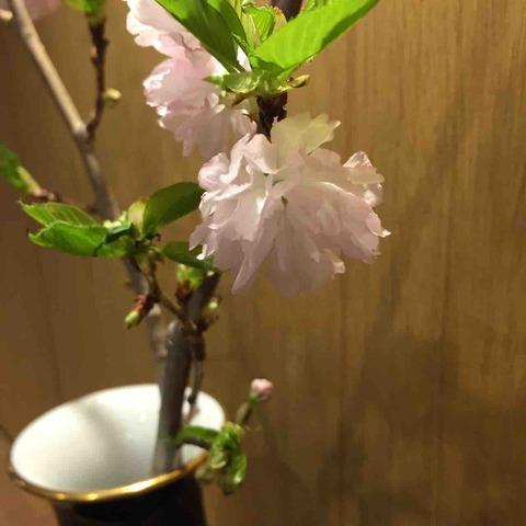 最後の桜🌸