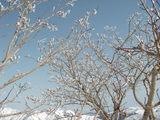 頂上近くの樹氷