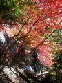 下部岩壁取付きの紅葉