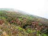 頂上付近の紅葉