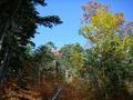紅葉の始まった樹林
