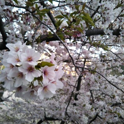 20-04-04-18-05-02-327_photo