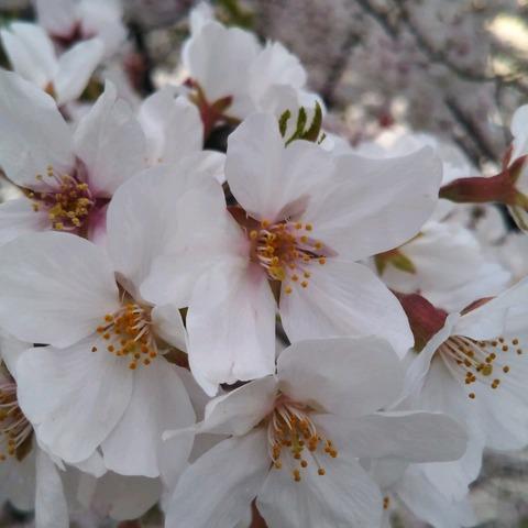 20-04-04-18-04-26-539_photo