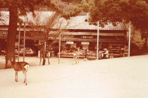 narakoen1979