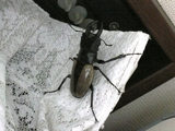 Insect (5)