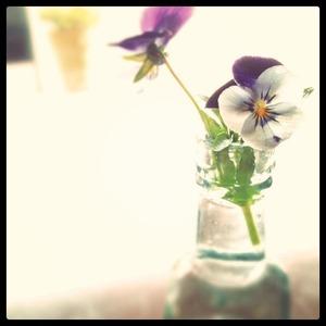 20110509[FLOWER]
