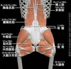 骨盤を整える大切な筋肉