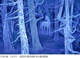 《白馬の森》