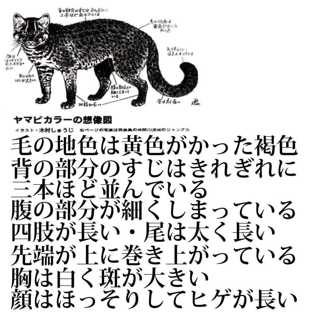 ヤマピカリャー2
