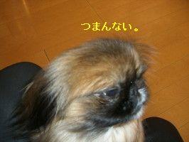 afa57759.jpg