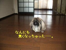 f49186e7.jpg