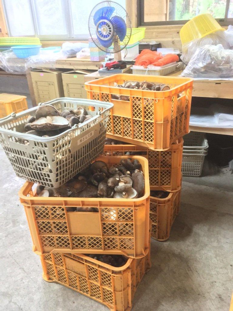 邦さん工房ブログ      11/2 原木しいたけ・野菜収穫&出荷メモ    コメント