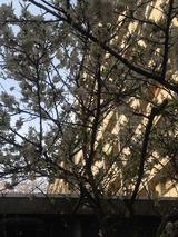 葉桜2015/04/12
