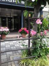 近くのお花2