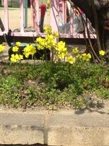 今年のお花