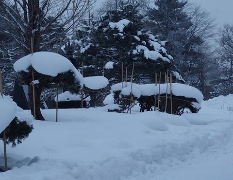 令2-1-8常磐公園樹木冬囲い冠雪