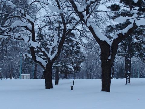 令2-1-8常磐公園樹木幹枝冠雪