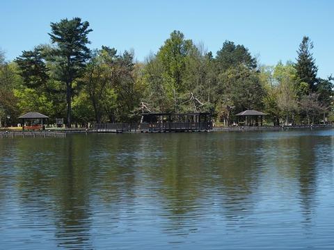 令2-5-15千鳥ケ池沿い新緑